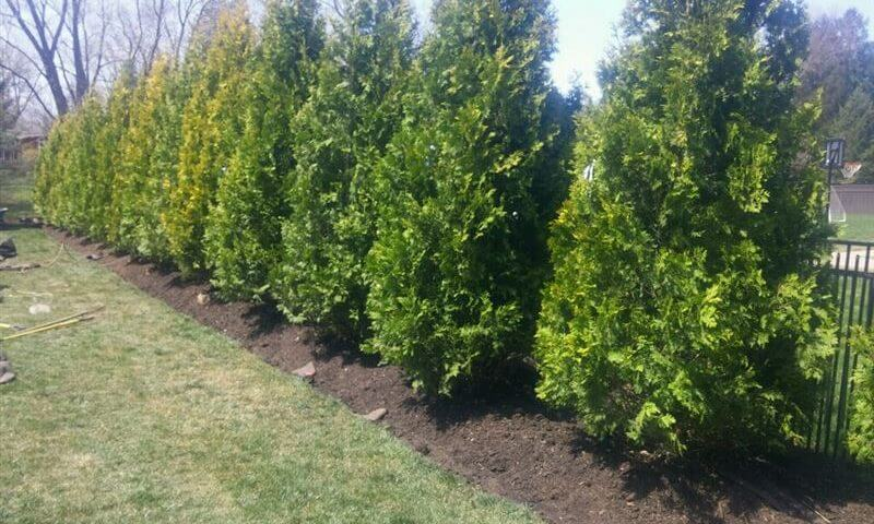 French Drain Amp Landscaping In Tinton Falls Nj Picture